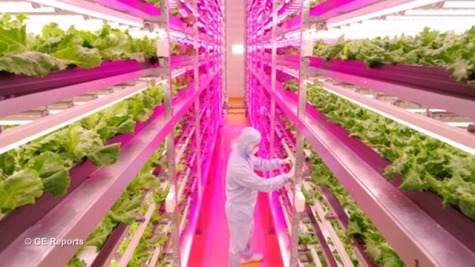GE-Reports-Indoor-Lettuce-Farm