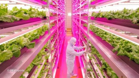 GE-Reports-Indoor-Lettuce-Farm